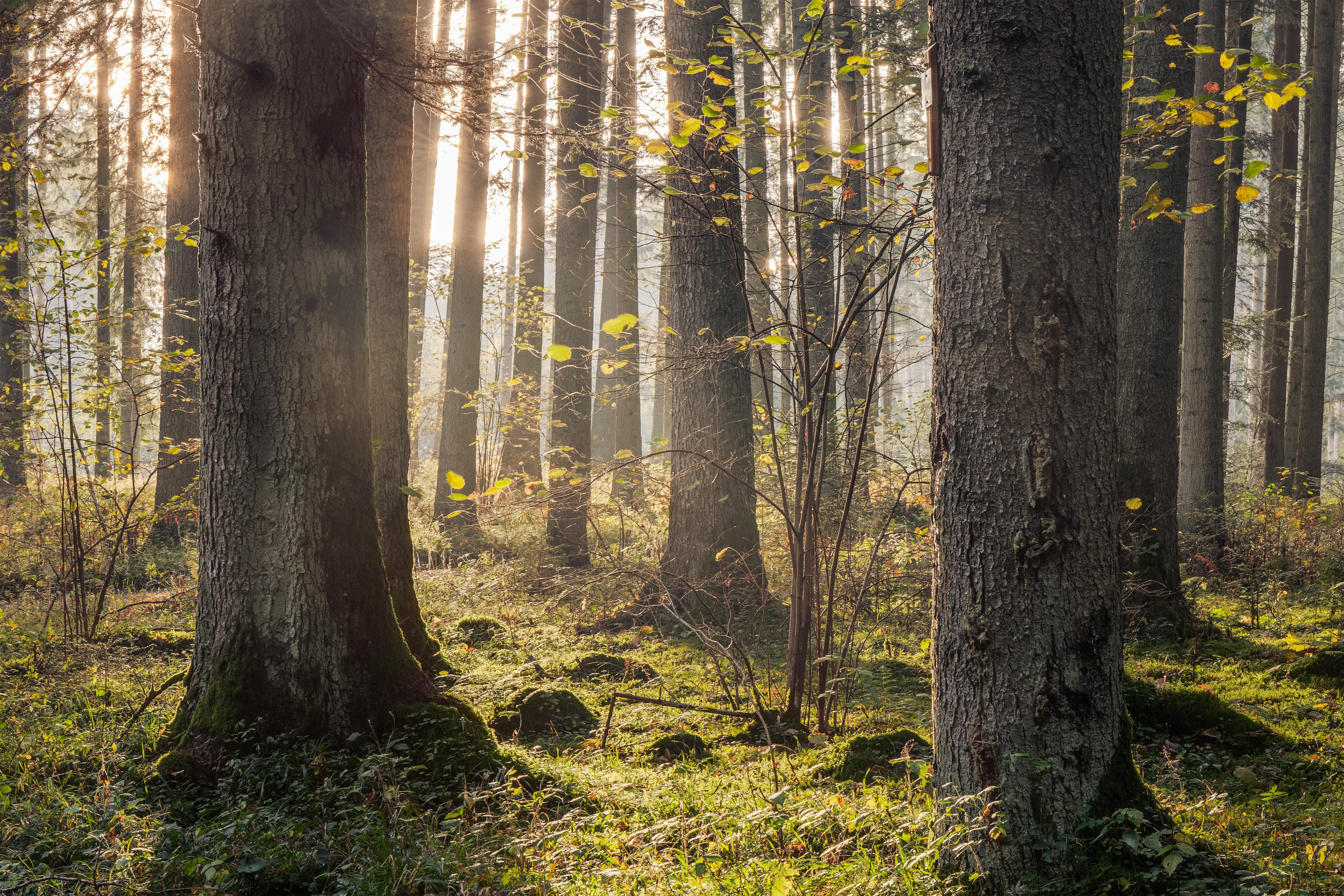 El poder del bosque el arte del shinrin-yoku